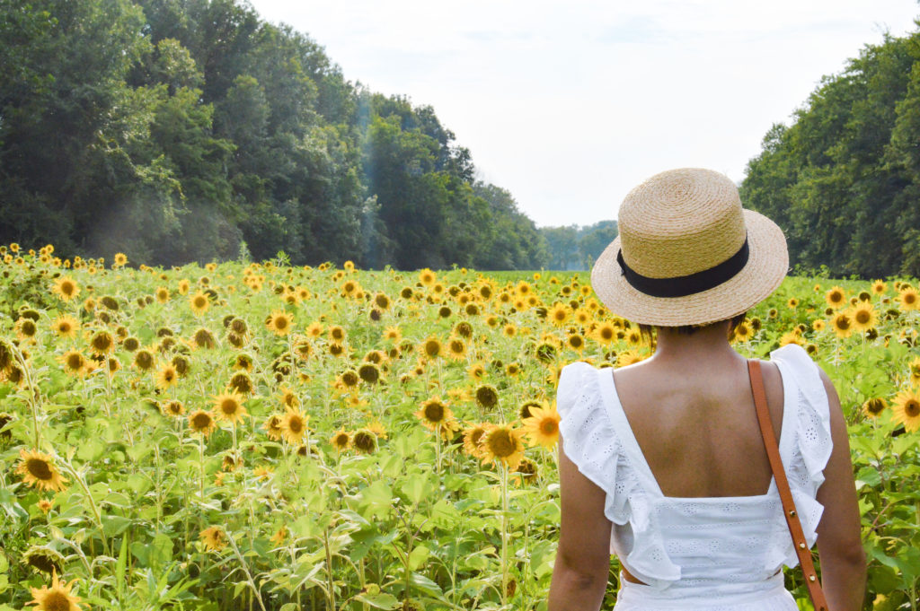 McKee-Beshers Sunflower fields – Maryland Sunflower fields – Madewell white eyelet dress, Sole Society boater hat | SamCora Blog