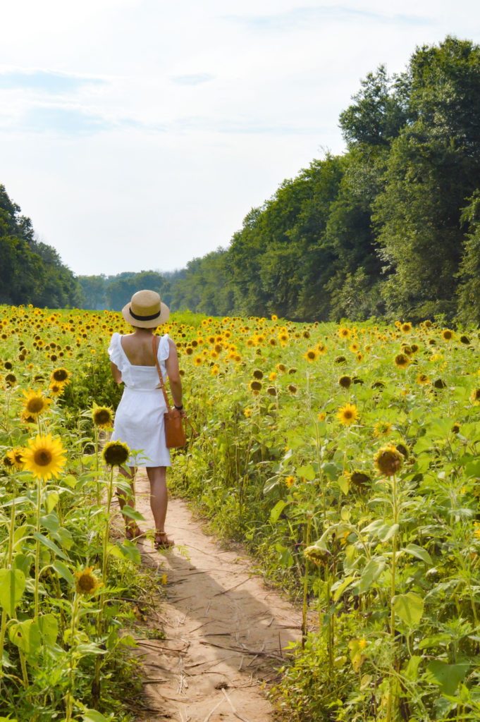 McKee-Beshers Sunflower fields – Maryland Sunflower fields – Madewell white eyelet dress, Sole Society boater hat, Mansur gavriel Mini mini bucket bag, K Jacques St tropez buffon sandals | SamCora Blog